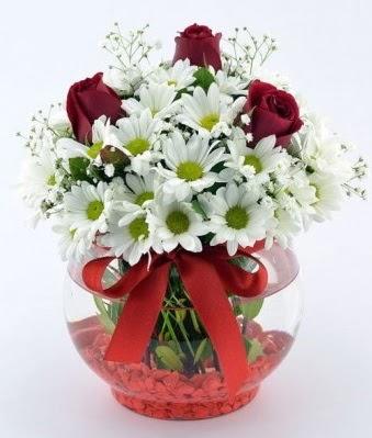 Fanusta 3 Gül ve Papatya  Kırşehir çiçekçi mağazası