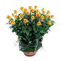 Kırşehir online çiçek gönderme sipariş  10 adet sari gül tanzim cam yada mika vazoda çiçek
