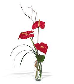 Kırşehir hediye çiçek yolla  cam yada mika Vazoda 3 adet  antoryum