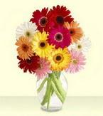 Kırşehir yurtiçi ve yurtdışı çiçek siparişi  cam yada mika vazoda 15 özel gerbera