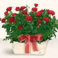 Kırşehir online çiçekçi , çiçek siparişi  11 adet kirmizi gül sepette