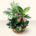 Kırşehir çiçek gönderme  5 adet canli çiçek sepette