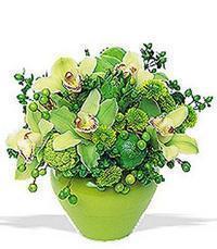 cam yada mika vazoda 5 adet orkide   Kırşehir güvenli kaliteli hızlı çiçek