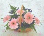 gerbera çiçeklerinde sepet   Kırşehir İnternetten çiçek siparişi