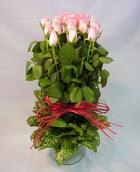 13 adet pembe gül silindirde   Kırşehir İnternetten çiçek siparişi