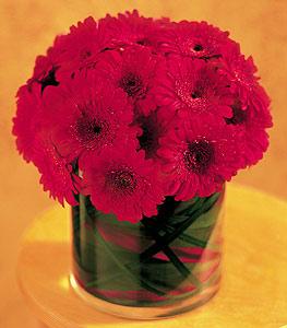 Kırşehir çiçek satışı  23 adet gerbera çiçegi sade ve sik cam içerisinde