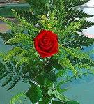1 adet kirmizi gül buketi   Kırşehir çiçekçiler