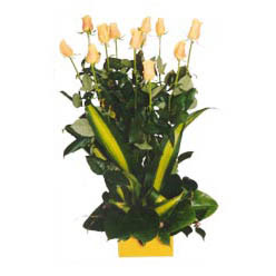 12 adet beyaz gül aranjmani  Kırşehir çiçek servisi , çiçekçi adresleri