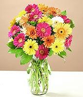 Kırşehir anneler günü çiçek yolla  17 adet karisik gerbera