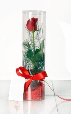 Kırşehir İnternetten çiçek siparişi  Silindir vazoda tek kirmizi gül