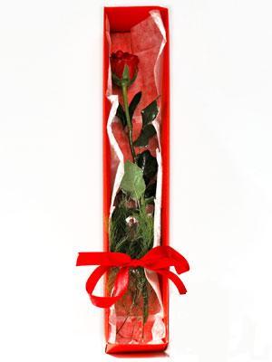 Kırşehir kaliteli taze ve ucuz çiçekler  1 adet kutuda gül