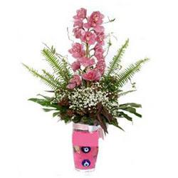 Kırşehir çiçek , çiçekçi , çiçekçilik  cam yada mika vazo içerisinde tek dal orkide çiçegi