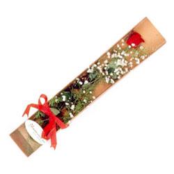 Kırşehir çiçekçi telefonları  Kutuda tek 1 adet kirmizi gül çiçegi