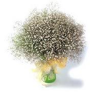 Kırşehir çiçek online çiçek siparişi  cam yada mika vazo içerisinde cipsofilya demeti
