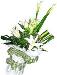 Kırşehir çiçek mağazası , çiçekçi adresleri  3 dal kazablanka çiçegi ve yesillikler