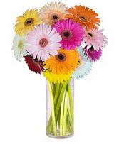 Kırşehir internetten çiçek satışı  Farkli renklerde 15 adet gerbera çiçegi