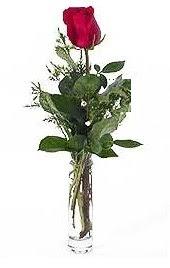 Vazo içerisinde 1 adet kirmizi gül  Kırşehir online çiçek gönderme sipariş