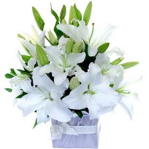 Kırşehir İnternetten çiçek siparişi  2 dal cazablanca vazo çiçeği
