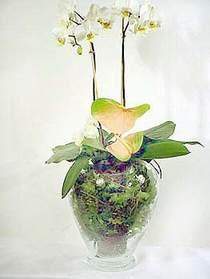 Kırşehir çiçek gönderme  Cam yada mika vazoda özel orkideler