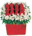 Kırşehir çiçek gönderme sitemiz güvenlidir  Kare cam yada mika içinde kirmizi güller - anneler günü seçimi özel çiçek