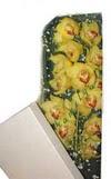 Kırşehir çiçek gönderme sitemiz güvenlidir  Kutu içerisine dal cymbidium orkide