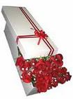 Kırşehir çiçek yolla  11 adet 1.kalite magnum güller