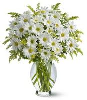 Vazo içerisinde beyaz krizantem çiçekleri  Kırşehir ucuz çiçek gönder