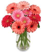 vazo içerisinde 13 adet gerbera çiçeği  Kırşehir hediye çiçek yolla