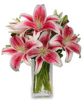 Vazo içerisinde 5 dal kazablanka çiçeği  Kırşehir online çiçek gönderme sipariş
