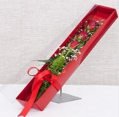 Kutu içerisinde 3 adet kırmızı gül  Kırşehir internetten çiçek siparişi