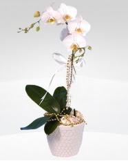 1 dallı orkide saksı çiçeği  Kırşehir güvenli kaliteli hızlı çiçek