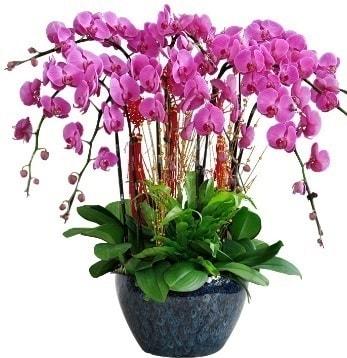 9 dallı mor orkide  Kırşehir cicekciler , cicek siparisi