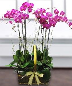 4 dallı mor orkide  Kırşehir çiçek mağazası , çiçekçi adresleri