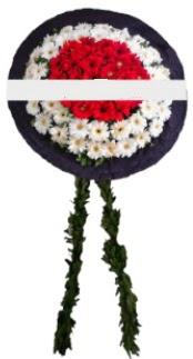 mozele çiçeği  Kırşehir 14 şubat sevgililer günü çiçek