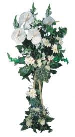 Kırşehir çiçek online çiçek siparişi  antoryumlarin büyüsü özel