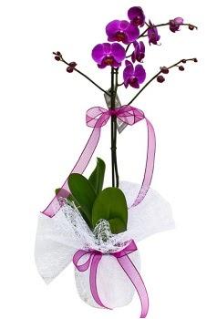 Tek dallı mor orkide  Kırşehir çiçek yolla