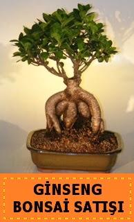 Ginseng bonsai satışı japon ağacı  Kırşehir çiçek siparişi vermek