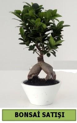Bonsai japon ağacı satışı  Kırşehir hediye sevgilime hediye çiçek