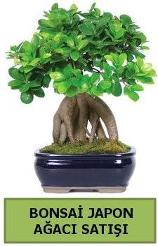 Bonsai japon ağacı satışı  Kırşehir çiçek gönderme