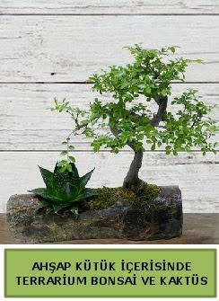 Ahşap kütük bonsai kaktüs teraryum  Kırşehir internetten çiçek satışı