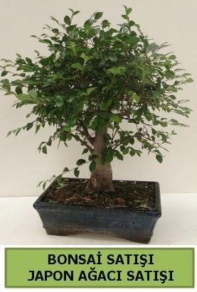 Minyatür bonsai japon ağacı satışı  Kırşehir çiçek yolla , çiçek gönder , çiçekçi