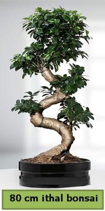 80 cm özel saksıda bonsai bitkisi  Kırşehir çiçek yolla