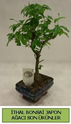 İthal bonsai japon ağacı bitkisi  Kırşehir 14 şubat sevgililer günü çiçek