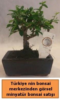 Japon ağacı bonsai satışı ithal görsel  Kırşehir İnternetten çiçek siparişi