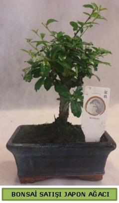 Minyatür bonsai ağacı satışı  Kırşehir çiçek gönderme sitemiz güvenlidir