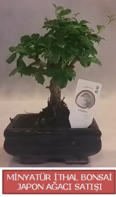 Küçük görsel bonsai japon ağacı bitkisi  Kırşehir çiçekçi telefonları