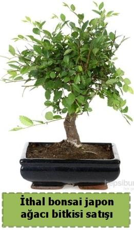 İthal bonsai saksı çiçeği Japon ağacı satışı  Kırşehir online çiçekçi , çiçek siparişi