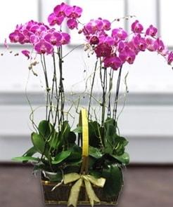 7 dallı mor lila orkide  Kırşehir çiçek yolla , çiçek gönder , çiçekçi