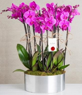 11 dallı mor orkide metal vazoda  Kırşehir çiçek yolla , çiçek gönder , çiçekçi
