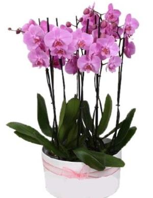 Beyaz seramik içerisinde 7 dallı mor orkide  Kırşehir çiçek yolla